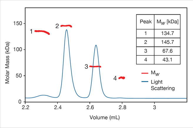 protein molar mass characterization 