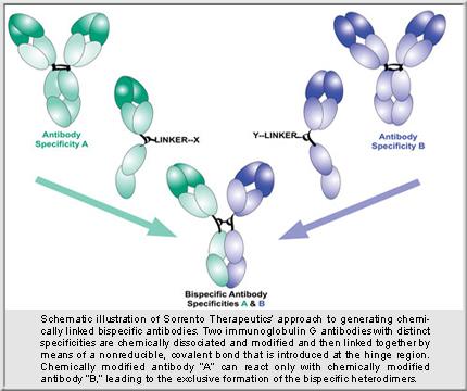 Sorrento Therapeutics Bispecific Antibody