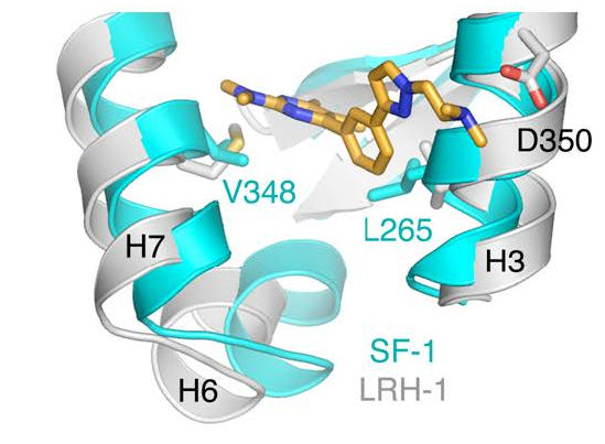 Small Molecule Bound to Protein
