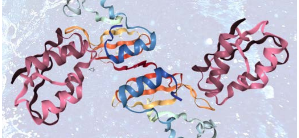 Fusion-protein Complexes