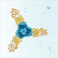 Vaccine-Subunit-Antigen-203
